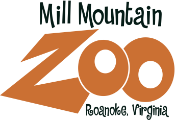 Mill Mountain Zoo is home to more than 175 animals!